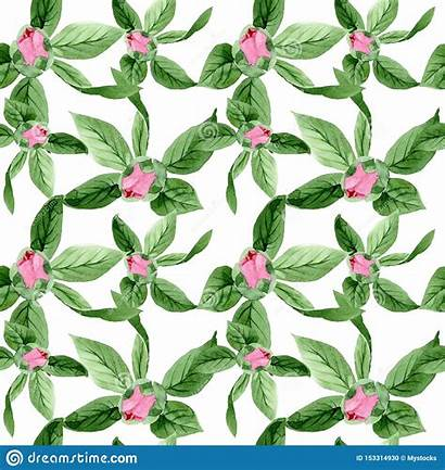 Camellia Watercolor Pattern Background Botanical Seamless Floral