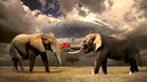 4K Elephant Wallpapers High Quality Download Free