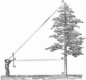 Measuring Tree Height