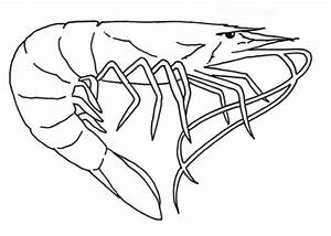 Shrimp coloring page Free Printable Coloring Pages