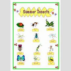 English Worksheet Summer Insects