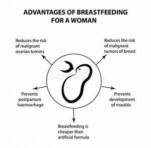 Breastfeeding Infographics Stock Illustrations  U2013 77