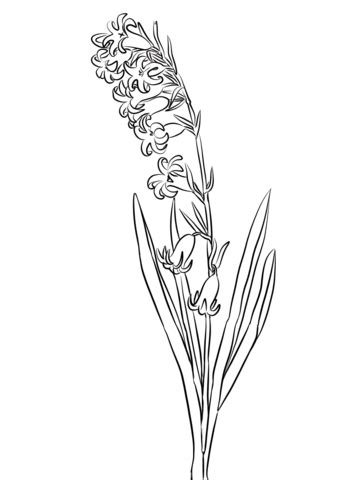 wild hyacinth coloring page  printable coloring pages