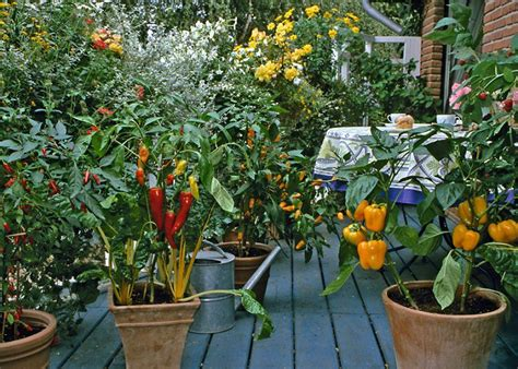 urban vegetable garden city vegetable garden