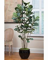 fiddle fig tree Value Priced 7' Fiddle Leaf Fig Silk Tree at ...