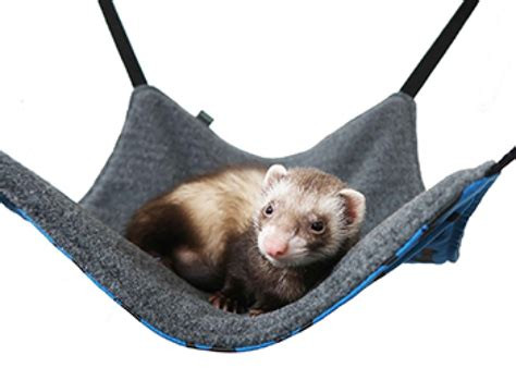 ferret beds and hammocks ferret hammocks uk and lolesinmo