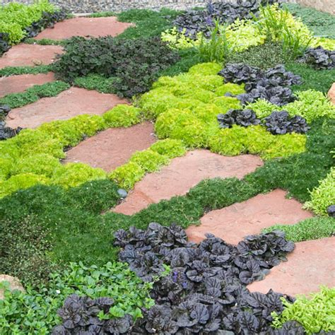 growing ground cover image gallery low growing ground cover