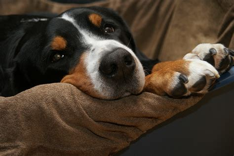 dealing  dog nail problems symptoms  treatment