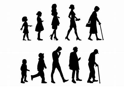 Human Grow Vector Stages Clipart Different Vectors