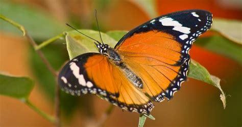 audubon butterfly garden and insectarium new orleans louisiana audubon butterfly garden and