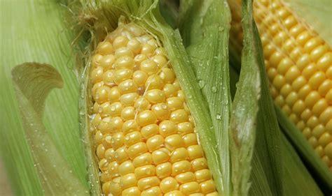 corn  aromatic seasonings recipe nyt cooking