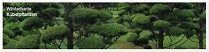 Immergrüne Winterharte Kübelpflanzen : parkg rtnereibritz ~ Markanthonyermac.com Haus und Dekorationen