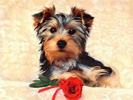 Cute Puppies Dogs Backgrounds