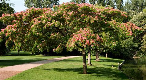 decorer sa cuisine quel arbre choisir pour s 39 offrir un coin d 39 ombre au jardin