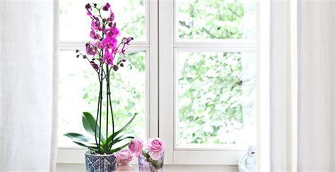 Herbst Deko Große Fenster by Fensterdeko Gt Gt Tolle Rabatte Bis Zu 70 Westwing