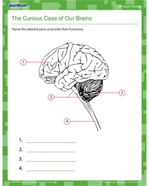 the curious of our brains free science printable