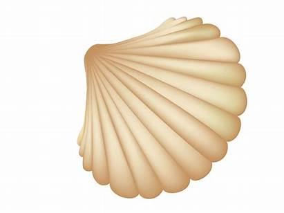 Transparent Shells Sea Clipart Seashell Seashells Vector