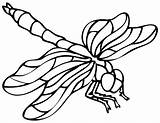 Dragonfly Coloring Printable Pages Drawing Outline Template Clipart Insect Cartoon Sheets Dragon Adult Dragonflies Bing Print Templates Illustration Drawings Getdrawings sketch template