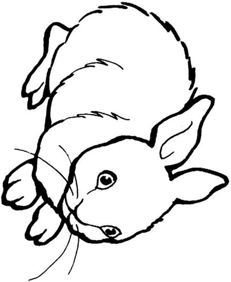Dann weiß dein kind schon, wie toll es ist, einen tierischen freund zu haben. Ausmalbilder waldtiere kostenlos - Malvorlagen zum ...