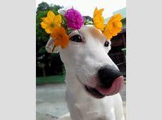 Conheça o cachorro sorridente da Tailândia Euro Tudo