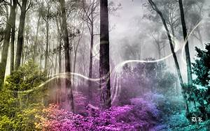 [41+] Enchanted Forest Wallpaper on WallpaperSafari