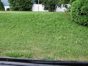Traitement Mauvaise Herbe : herbicide s lectif m a pelouse marc archambault entretien et traitement de pelouse ~ Melissatoandfro.com Idées de Décoration