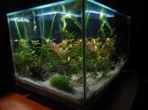 gambar aquarium ikan hias minimalis cantik beserta ikan
