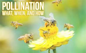 Pollination Guide 2019