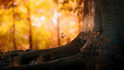 Forest Wallpapers 1080p Backgrounds Desktop Mobile Forests