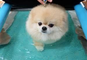 Douleur Milieu Dos Cancer : les 131 meilleures images propos de coloriage chien sur pinterest divertissant animaux et ~ Medecine-chirurgie-esthetiques.com Avis de Voitures