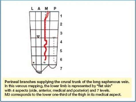 treatment  vulvar  perineal varicose veins servier