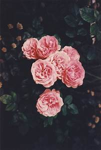 beautiful, flowers, hipster, photo, photography - image ...