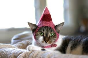 cat in a hat cats in hats
