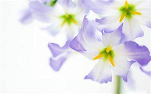 Purple Flower White Backgrounds - Wallpaper Cave