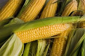 6 Questions To Help Plan Your 2015 Corn Strategy - Agroinfo