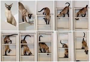 cat storage cat litter box band of cats