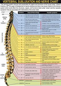 Your Spinal Column  U0026 Nervous System