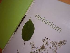Was Ist Ein Herbarium : bodenseewellen herbarium das zweite ~ A.2002-acura-tl-radio.info Haus und Dekorationen