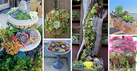 Garden Decoration by 50 Best Succulent Garden Ideas For 2017