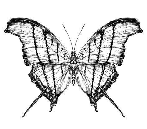detailed realistic sketch   butterfly stock vector
