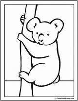 Koala Coloring Pages Peek Boo Sheet Baby Cute Koalas Realistic Colorwithfuzzy sketch template