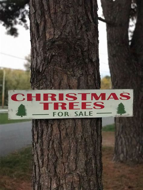 christmas tree farm for sale 25 best ideas about trees for sale on tree sale fresh cut