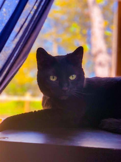 black cat wallpaper iphone desktop wallpapers because