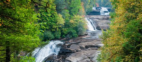 Friends of DuPont Forest | Volunteer in DuPont State ...