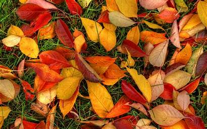 Desktop Leaves Autumn Wallpapers Fall Widescreen Ground