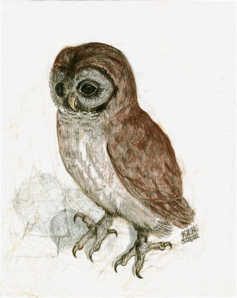albrecht durers  owl  colorsofthewind