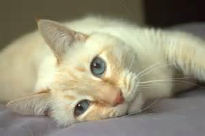cat symptoms disease in cats symptoms