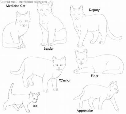 Warrior Cat Cats Coloring Pages Bases Clan