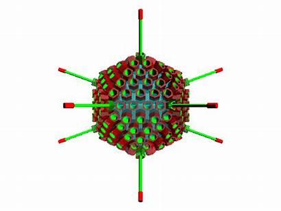 Adenovirus Viruses Virus Animated Rna Dna Synthesis
