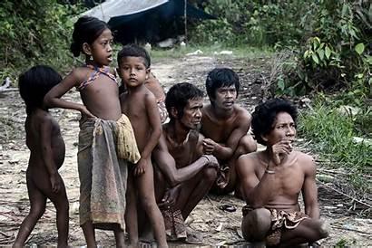 Indigenous Indonesian Jungle Indonesia Struggle Jambi Maizura